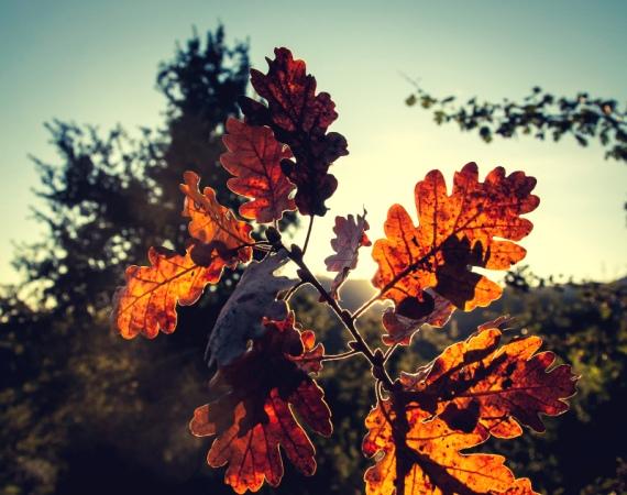 Zasyp dołek – uszczęśliwiacze na jesień
